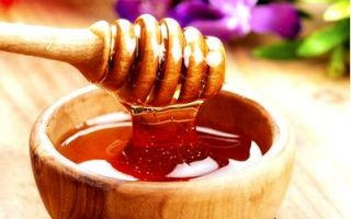 Гречишный мед и его полезные свойства