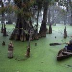 Болото манчак — уникальная экосистема Луизианы