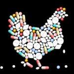 Синусит у кур – симптомы лечение