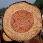 Брус деревянный, стандартные размеры и другие характеристики материала используемого для