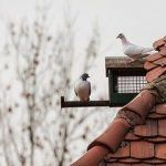 Как самому сделать голубятню, кормушку и питомник для птиц