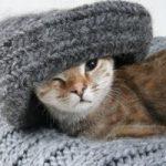 Что можно связать из кошачьей шерсти шарф, свитер, пояс