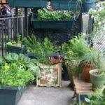Огород на балконе, выращивание овощей и ягод на лоджии