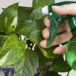 Как эффективно бороться в домашних условиях с насекомым