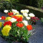Какие цветы допустимо посадить на кладбище, чтобы они цвели все лето