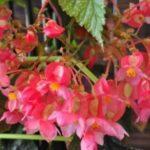 Озеленение балкона, как украсить лоджию цветами фото