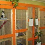 Как выбрать лучшую гостиницу для животных в Уфе