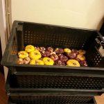 Гладиолусы как правильно хранить, когда доставать из холодильника на проращивание и как правильно