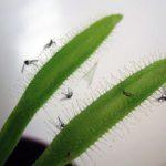 Избавляемся от мошек в цветочных горшках популярные методы, как не допустить их появления