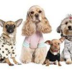 Каким собакам нужен комбинезон в холодное время года виды комбинезонов, какие породы больше других