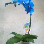 Виды домашних орхидей и их названия разновидности фаленопсисов и уход