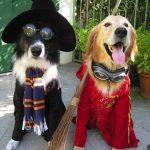 Костюм для собаки на Хэллоуин своими руками идеи для изготовления простых и сложных костюмов