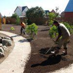 Как выращивать гладиолусы подготовка к посадке, когда сажать весной и особенности выращивания