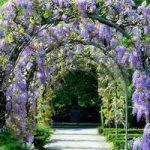 Вьющиеся растения для сада описание многолетних и однолетних цветов, виды и названия, правила ухода