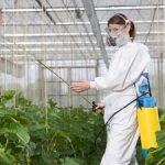 Как использовать Актару для комнатных растений инструкция по применению инсектицида, отзывы о
