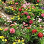 Какие есть сорта низкорослых цветов для клумбы названия растений и их виды, оформление цветника,