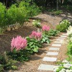 Астильба — посадка и уход в открытом грунте выращивание цветка, инструкция и фото растения