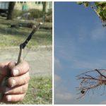 Как посадить виноград саженцами когда лучше сделать — осенью или весной, способы посадки, видео