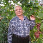 Виноград ранний Гурман описание сорта, фото, отзывы