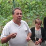 Виноград София описание сорта, фото, отзывы