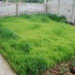 Выращивание и уход за крыжовником весной посадка и пересадка, борьба с болезнями
