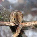 Как защитить яблоню от мышей что делать, если кору объели, чем обработать дерево