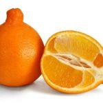 Где и как растут апельсины, особенности посадки и выращивания комнатного вида