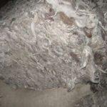 Что такое поярковая шерсть Характеристики, свойства, где используется