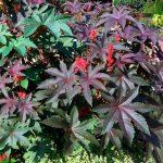 10 самых ядовитых растений в мире