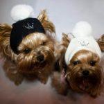 Как сшить, связать шапку для собаки своими руками (модели, выкройки, схемы, описание)