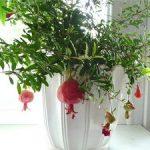 Как посадить карликовый гранат в домашних условиях особенности выращивания и ухода за комнатным