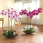 Как правильно пересадить орхидеи фаленопсис в домашних условиях инструкция для пересадок, советы и