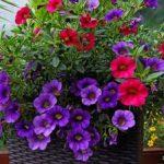 Выращивание петунии из семян в домашних условиях выбор семян и посадка, правила ухода, полезные