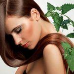 Отвар крапивы для волос как заваривать