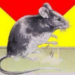 Чем отмыть клей для мышей с рук, с шерсти животных, с пола и мебели