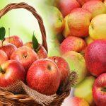Снятся яблоки к чему — приснились яблоки красные и зеленые