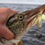 Лучшие спиннинги 2019 года — 19 ТОП рейтинг лучших для ловли рыбы