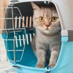 Какую переноску выбрать для домашней кошки