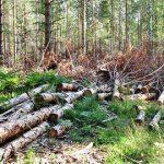Экологические проблемы России и какие существуют пути их решения
