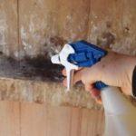 Содержание цесарок в домашних условиях и уход за ними