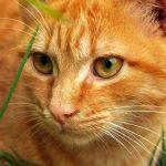 Лучшие витамины для кошек и котов — какой фирмы выбрать