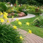 Цветы Лилейники каталог сортов растений с названиями и фото, применение в композициях, правила ухода