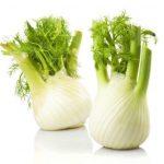 Фенхель – полезные свойства и противопоказания, в чем разница с укропом, применение семян и других