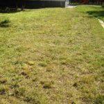 Почему желтеет газон и что делать для устранения пятен