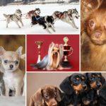 Лучшие собачьи питомники в Омске, где живут тои, хаски, таксы, йорки