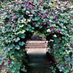 Посадка и уход за гиацинтовыми бобами описание, правила выращивания из семян