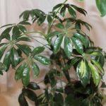 Самые неприхотливые комнатные цветущие растения названия, описание и фото