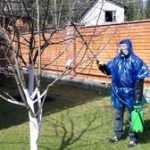 Особенности обработки деревьев весной этапы обработки от вредителей и болезней, рекомендации по саду