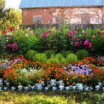 Многолетние тенелюбивый цветы для сада, цветущие все лето напролет