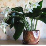 Классификация домашних цветов в горшках неприхотливых и не требовательных к уходу